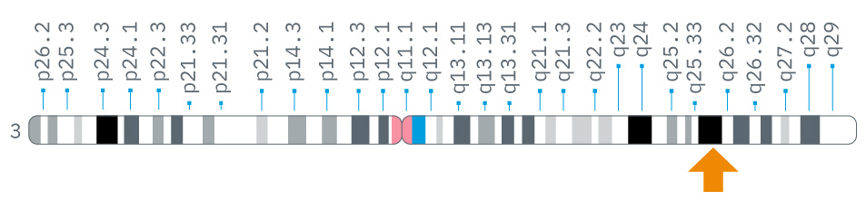 where-gsid-gene-located.png