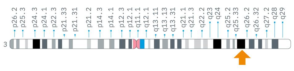 Sucraid_Genetics_SI-Gene.jpg